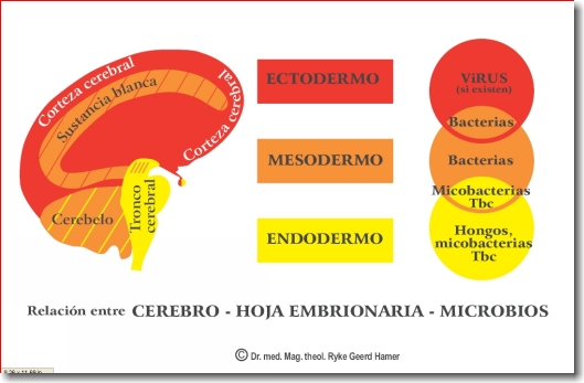 NMG_cerebro-microbios