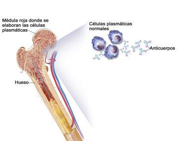 medula osea y celulas plasmaticas