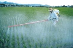 pesticida-brasil