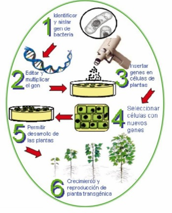 modificar genes