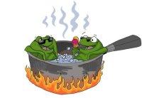 ranas cocinandose