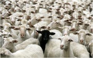 rebaño-oveja negra