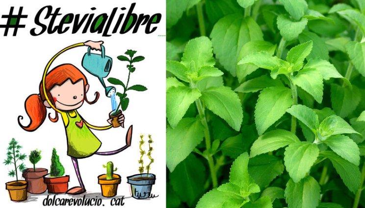 Resultado de imagen de dulce revolucion stevia